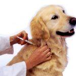 Vacuna de la rabia y heptavalente